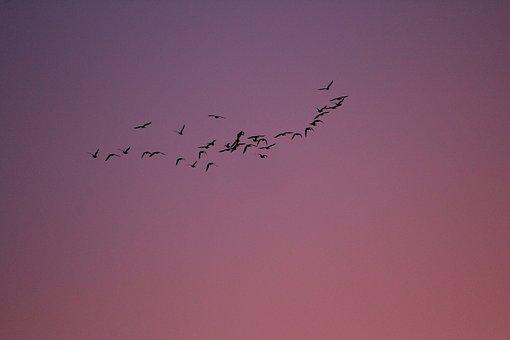 Birds, Flight, Morgenrot, Sunrise, Nature
