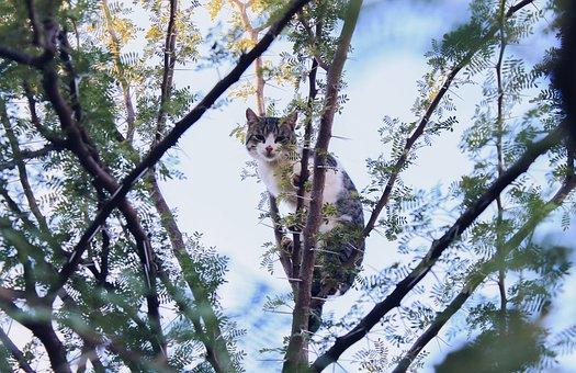 Cat, Stuck, Tree, Blue Sky, Stuck Over Tree