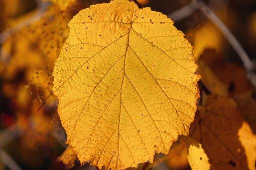 Leaf, Structure, Veins, Leaf Veins, Yellow, Autumn