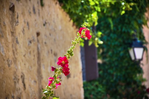 Flower, Vine, Wayward, Wild, Greenery, Foliage