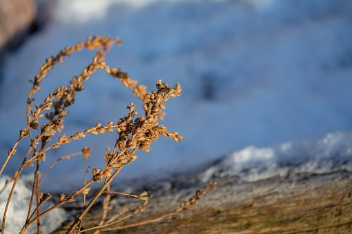 Shrub, Winter, Branch, Nature, Snow, Cold, White, Snowy