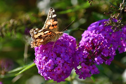 Butterfly, Nature, Insect, Wing, Animal World