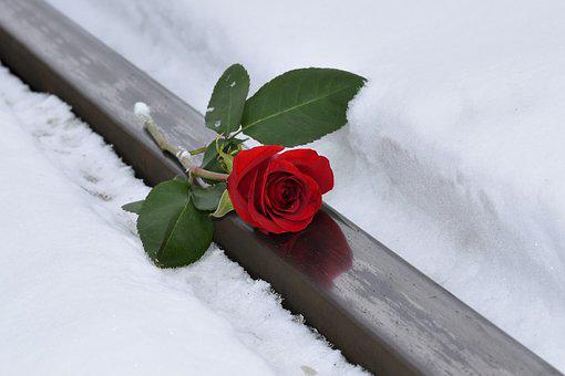 Red Rose, Lost Love, Snow, Winter, Rail Track