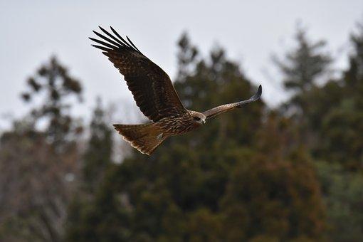 Animal, Forest, Bird, Wild Birds, Raptor, Video