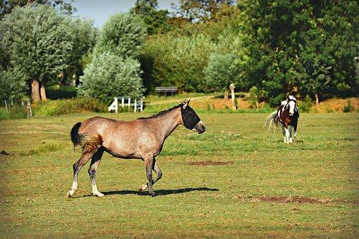 Horse, Animal, Mammal, Equine, Pony, Fly Mask
