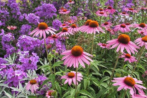 Pink, Atlanta, Exotic, Flora, Gardens, Tropical