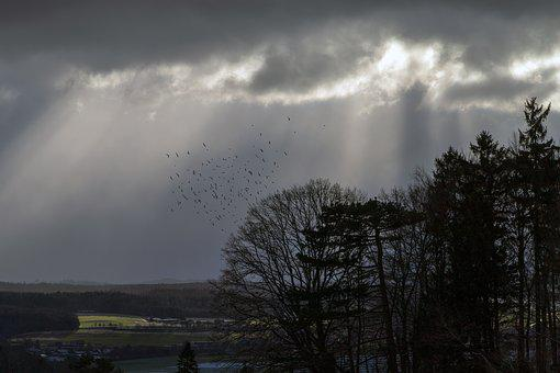Flock Of Birds, Mood, Clouds, Sky, Atmosphere, Birds