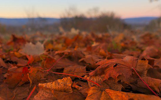 Leaves, Autumn, Nature, Fall Foliage, Fall Color
