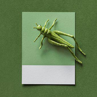 Abstract, Background, Bug, Card, Colorful, Concept