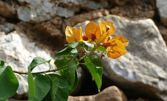 Plant, Mediterranean, Blossom, Bloom, Bush, Nature