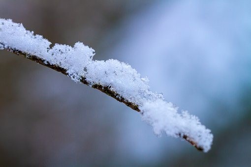 Winter, Branch, Snow, Cold, Frost, Wintry, Forest