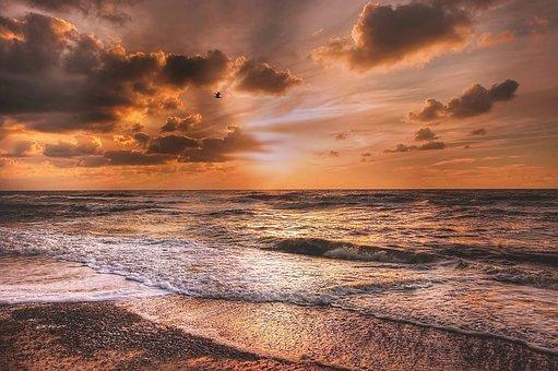 Denmark, Seagull, Sun, Sea, Bird, Water, Coast, Sky