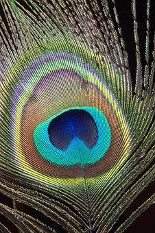 Peacock, Feather, Close-up, Macro, Bird, Colorful