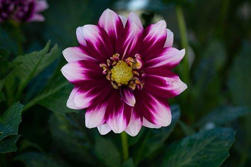 Flower, Flora, Summer, Plant, Nature, Bloom, Blossomed