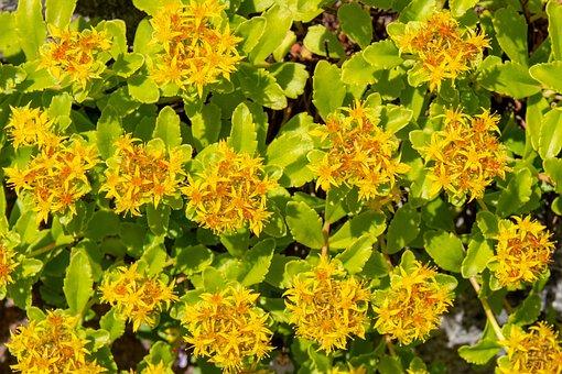 Flowers, Garden, Plant, Summer, Yellow, Flower, Petals