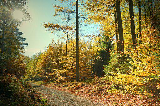 Landscape, Nature, Autumn, Forest, Forest Path