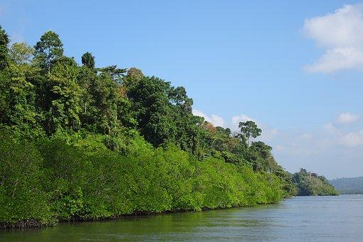 Mangroves, Forest, Lush, Greenery, Creek, Environment