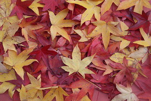 Leaves, Fall, Nature, Colorful, Orange, October, Forest