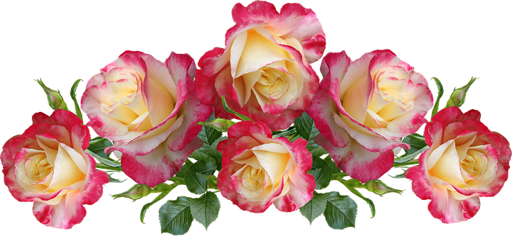 Roses, Flowers, Fragrant, Arrangement, Garden, Nature