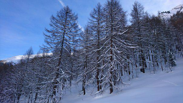 Forest, Winter, Firs, Landscape, Trees, Wintry, Scenic