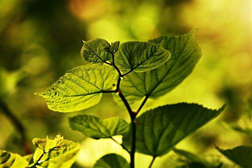 Leaf, Vein, Pattern, Twig, Foliage, Plant, Green