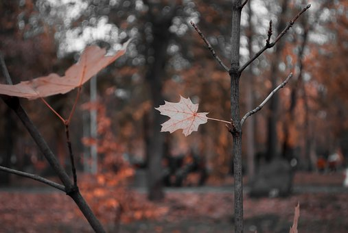 Bokeh, Leaves, Sheet, Foliage, Nature, Sprig
