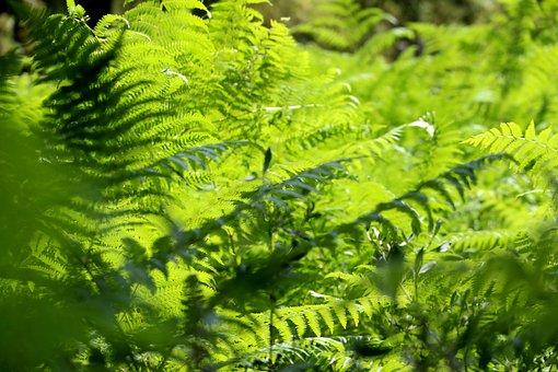 Nature, Forest, Leaves, Landscape