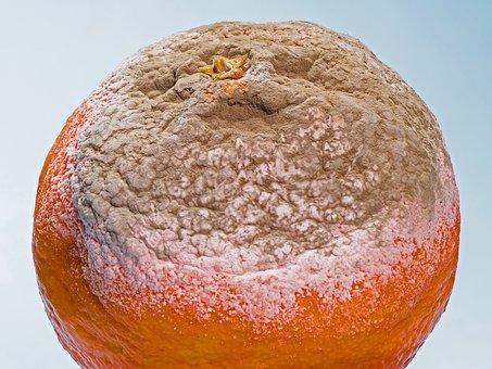 Mold, The Formation Of Mold, Moldy, Mandarin