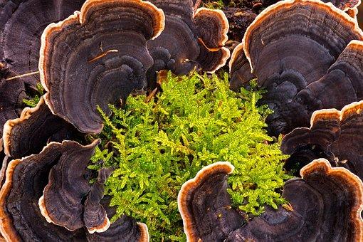 Mushroom, Tree Fungus, Moss, Forest Mushrooms