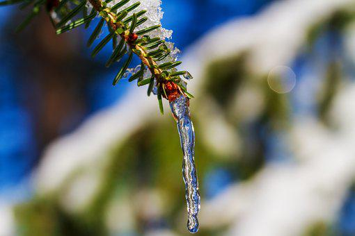 Winter, Icicle, Frozen, Frost, Cold, Icy, Water, Nature