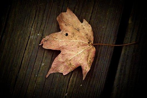 Leaf, Table, Fall, Wood, Nature, Plant