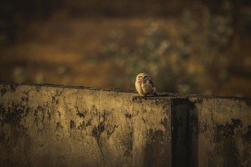 Owl, Wallpaper, O, Bird, Night, Portrait, Eye, Magic