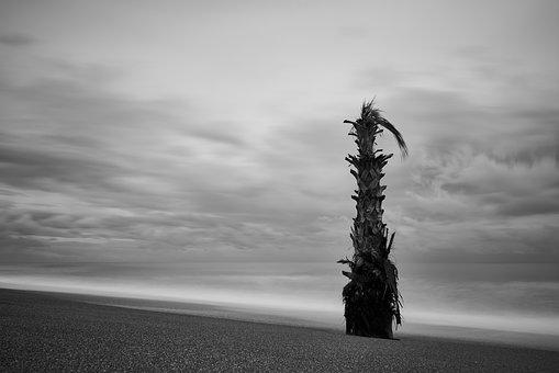 Palm, Tree, Artistic, Black And White, Marine, Sky