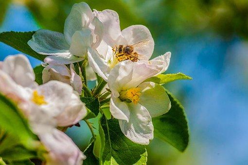 Spring, Nature, Plant, Pink, Garden, White, Flora