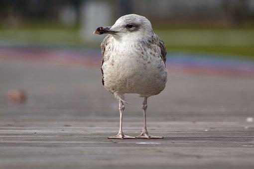 Seagull, Portrait, Animal, Nature, Bird, Sky, White