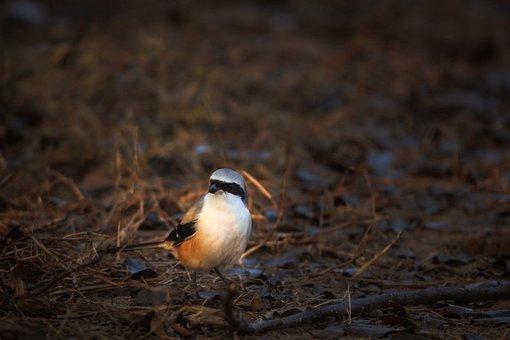 Small Bird, Hummingbird, Nature, Colorful, Wildlife