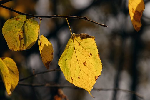 Fall Foliage, Leaves, Stains, Hanging, Depend, Colored