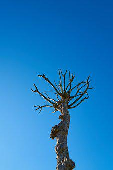 Tree, Dried Up, Autumn, Winter, Blue, Live, Trees