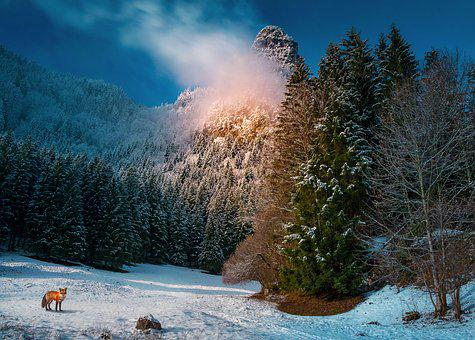 Winter, Landscape, Snow, Nature, Wintry, Hiking