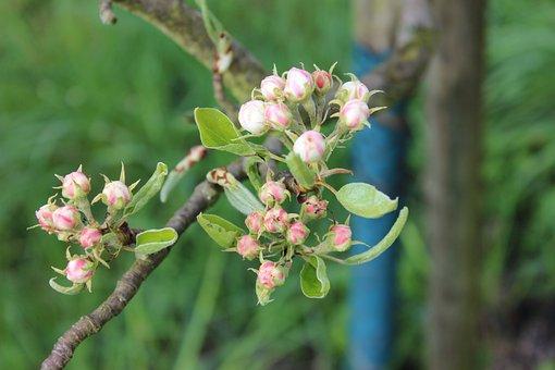 Blossom, Bloom, Branch, Pink, Tree, Bud, Spring, Bloom