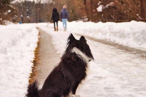 Dog, Animal, Charming, Small, Friendship