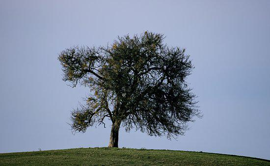 Tree, Deciduous Tree, Autumn, Meadow, Mountain, Nature