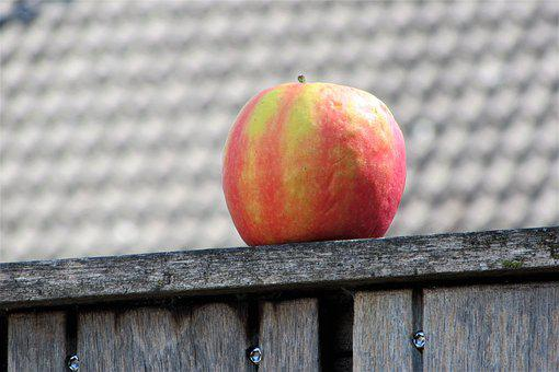 Apple, Fruit, Healthy, Around, Fence, Are, Color, Red