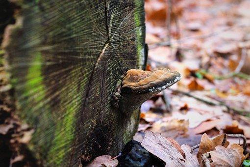 Mushroom, Log, Moss, Leaves, Forest, Nature, Botany