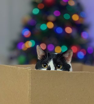 Cat, Box, Kitten, Mascot, Christmas, Lights
