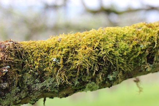 Moss, Branch, Nature, Green, Tree, Wood, Landscape