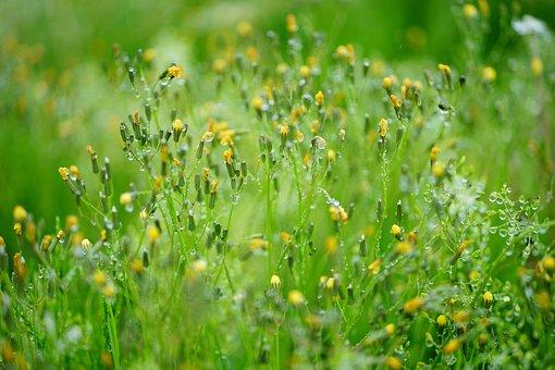Green, Grass, Nature, Bokeh, Grassland, Landscape