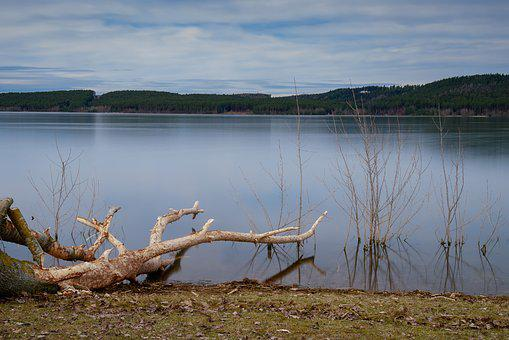 Lake, Tree, Branch, Green, Sky, Landscape, Nature
