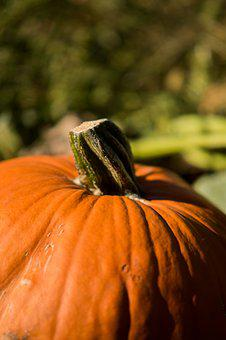 Pumpkin, Nature, Fall, Vegetables, Harvest, Halloween