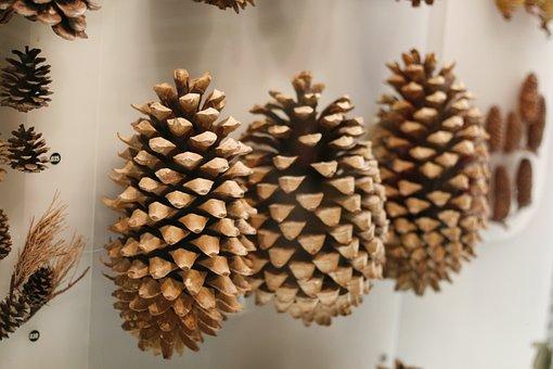 Pine Cone, Nature, Fruit, Ornament, Museum, Exhibition